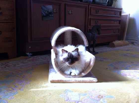 katt i sol