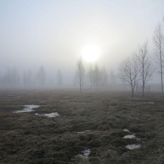 morgon vid Tåkern 1