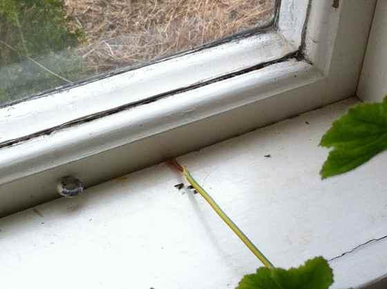 sladd fönster