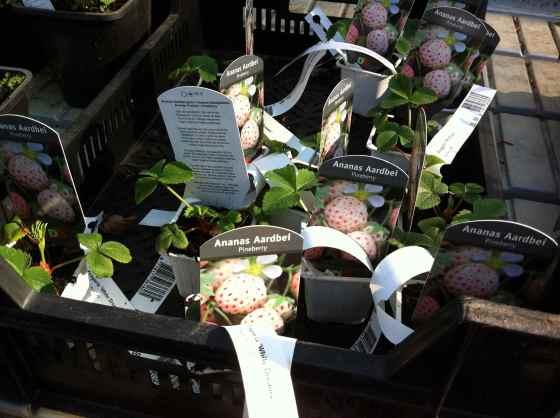 trädgård plantor