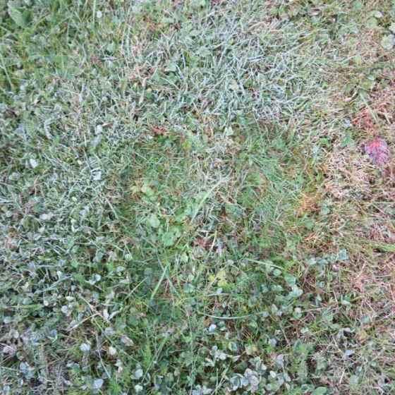 frostfötter