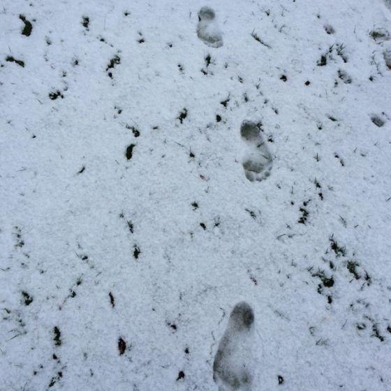 barfota i snö
