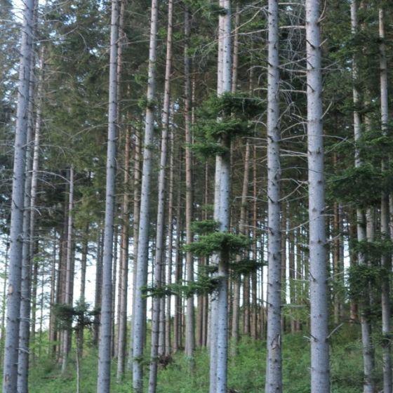 skog. Omberg