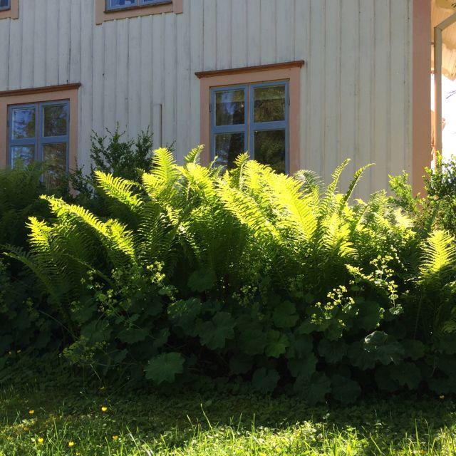 Trädgård O Sånt : Trädgård gangaochrurik sida