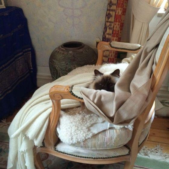 sri murthi o katten