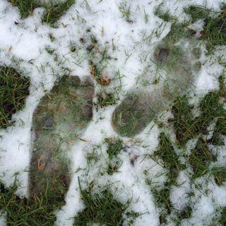 snöiga fötter