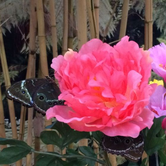 R , blomma