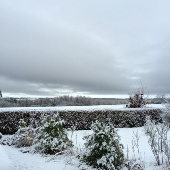 snöigt