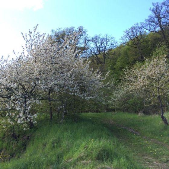 blom träd