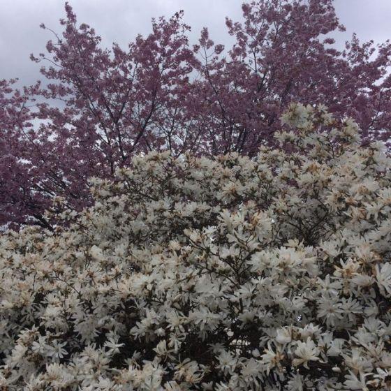 Blommor Motatal