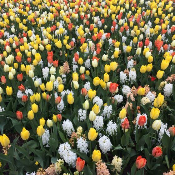 Mer blommor Motala