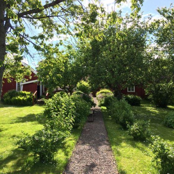 Trädgård Skänninge