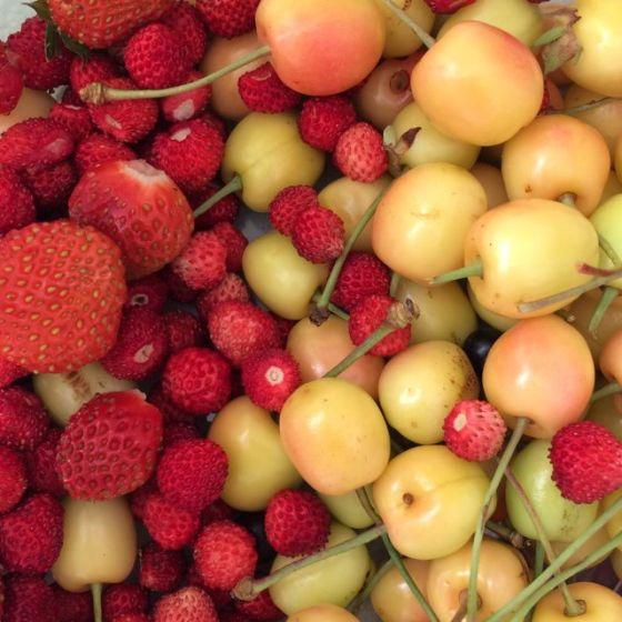 körsbär, smultron och jordgubb