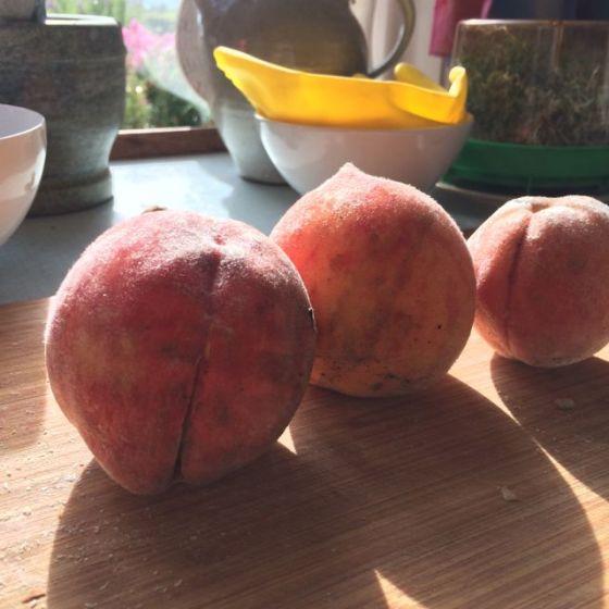persikor sista augusti