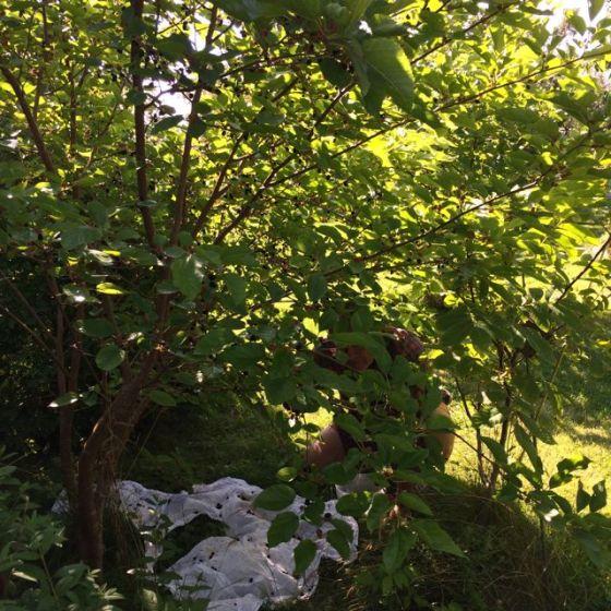 Rurik bland mullbär