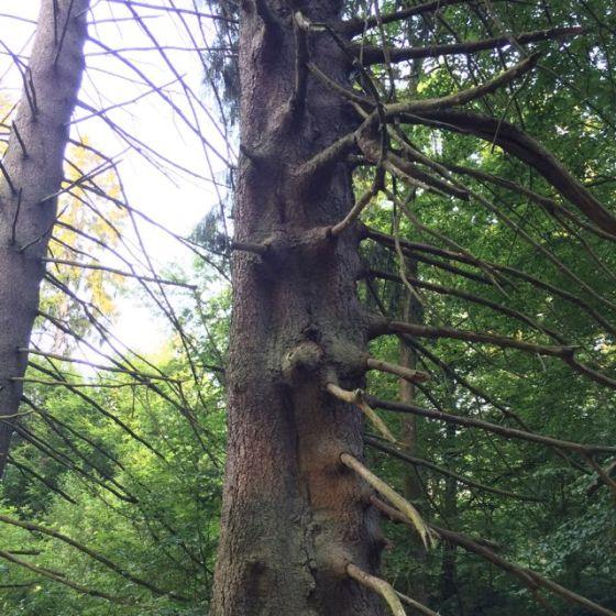 Wanås, träd
