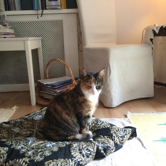 Katt, Kitty