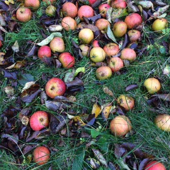 fallfrukt, äpple
