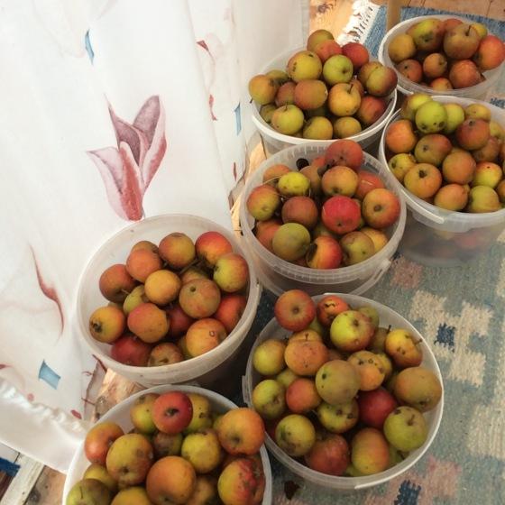 spannar med äpplen