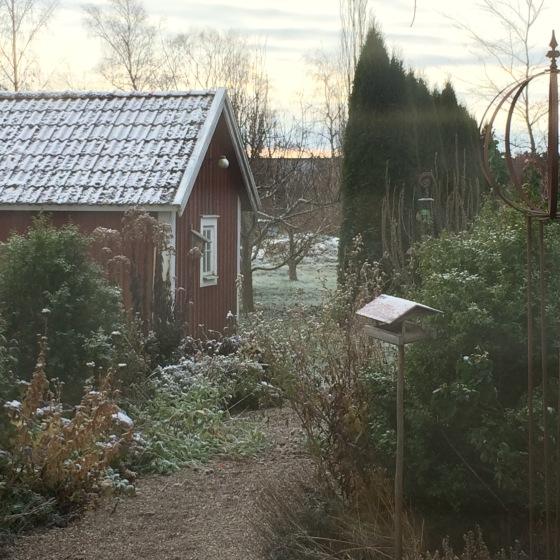 frostig trädgård