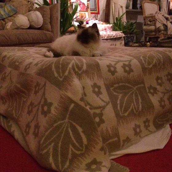 Katt på madrass