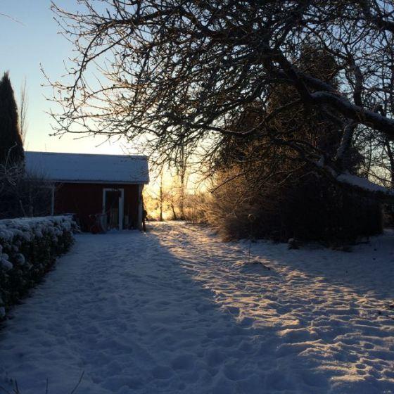 ljus i snö