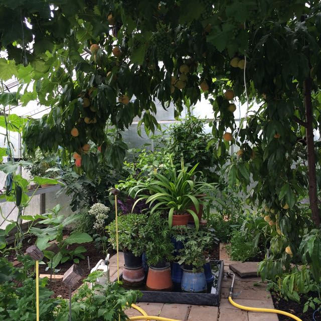växthuset, sommar