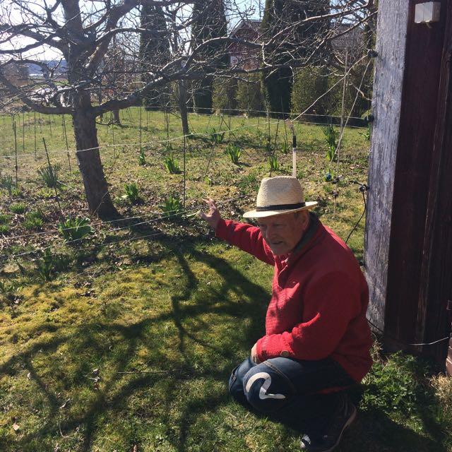 Rurik och tulpanerna