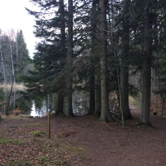 Omberg, paddsjön