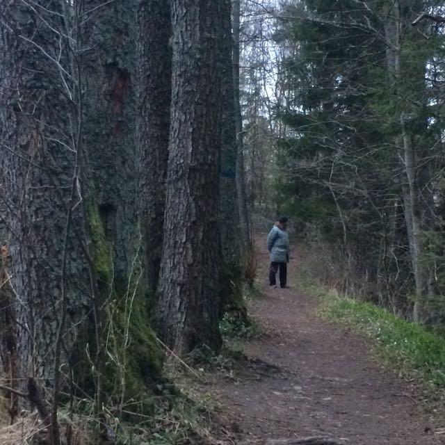 Rurik i skogen
