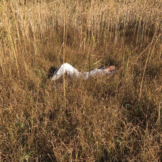 ligga i gräset