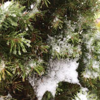 snö i april, Borghamn