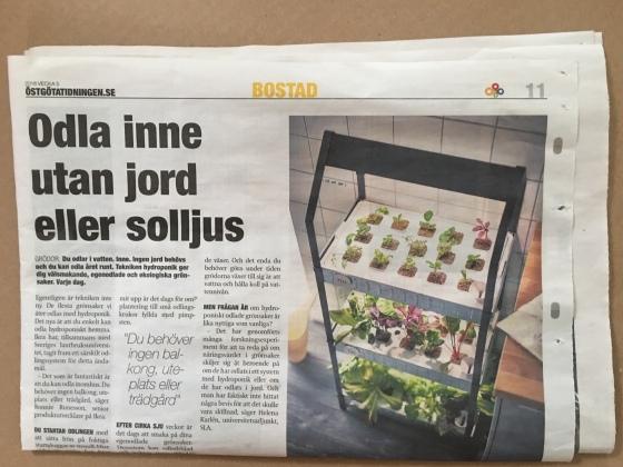 Artikel, IKEA Krydda