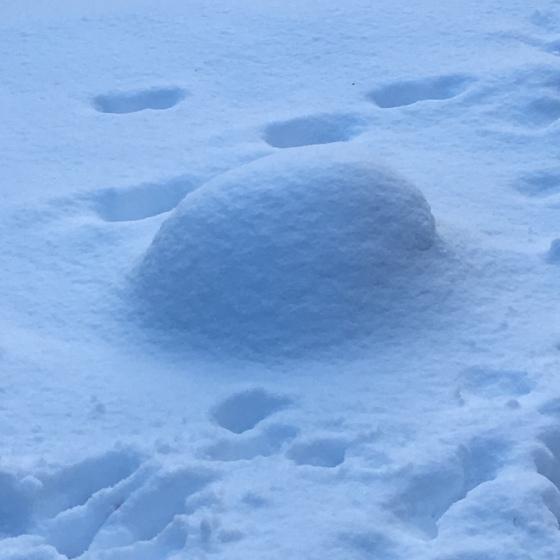 Snöig sten