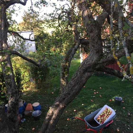 Utsikt från äppelträdet