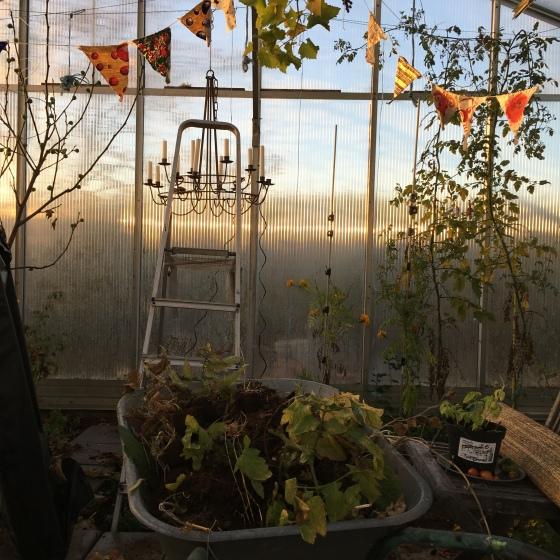 Höst, växthus