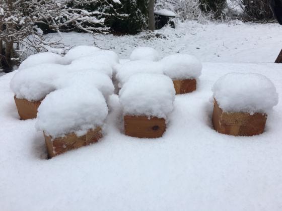 Klossar i snö