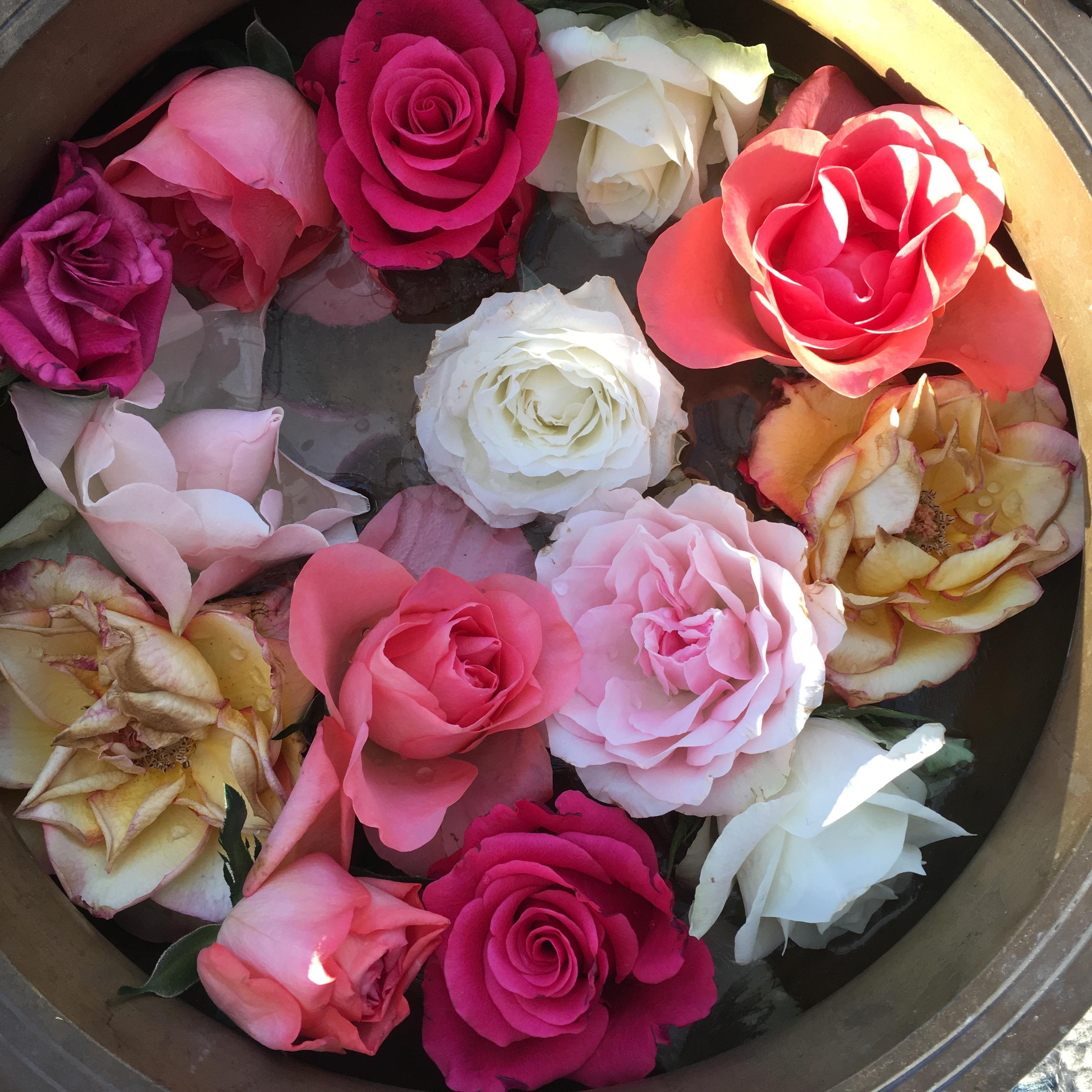 Rosor i skål
