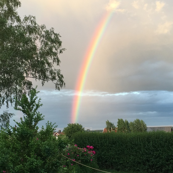 Regnbåge, midsommar