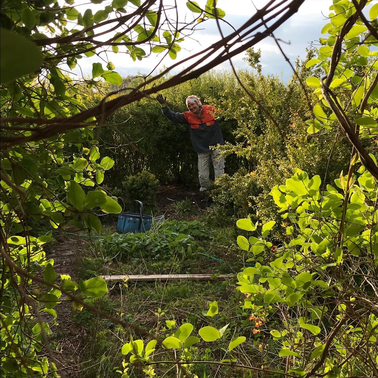 en plats i trädgården