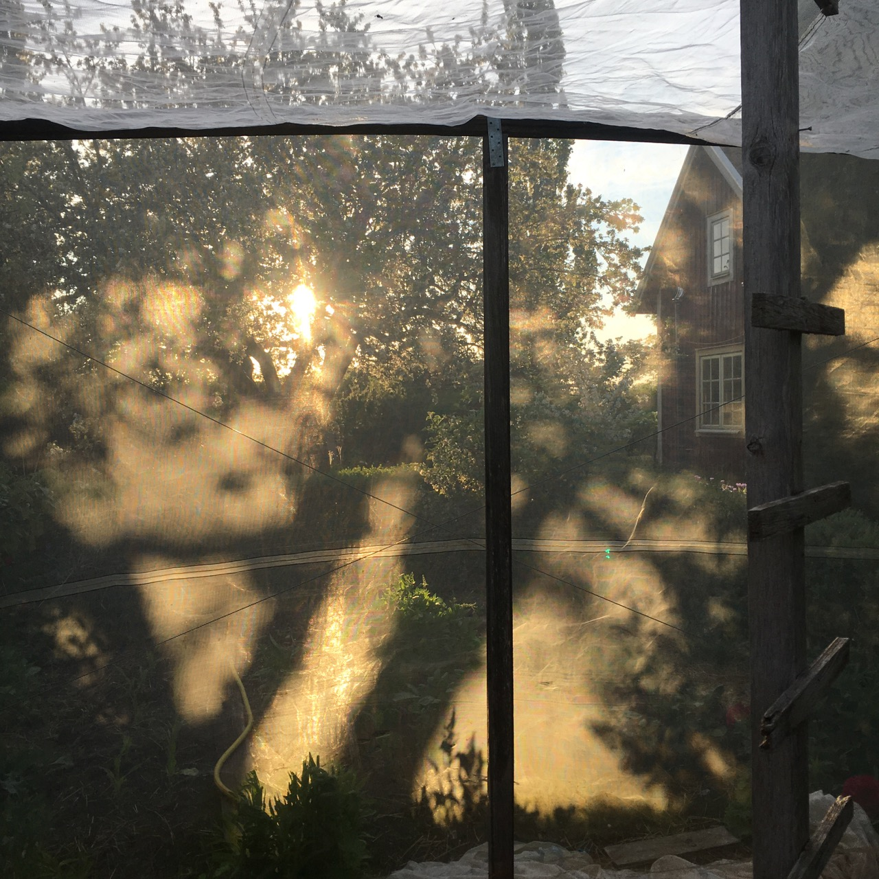 sol på kålhuset