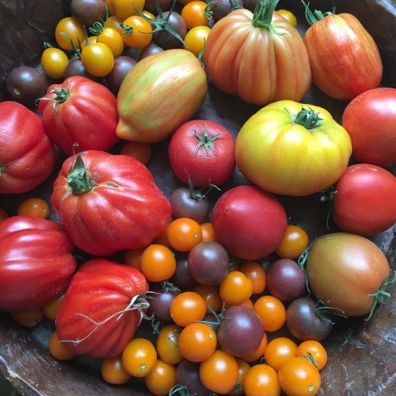 massa tomater